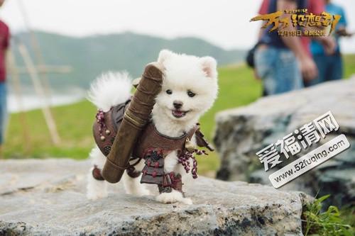 电影万万没想到中的小狗阿修罗应该是白色博美小