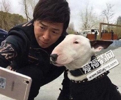 微博上的斜眼黄狗表情_极限挑战2黄渤带的像孙红雷的狗是什么品种?极限挑战长得和黄