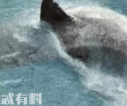 巨齿鲨的原著是什么 电影最后的结局是什么