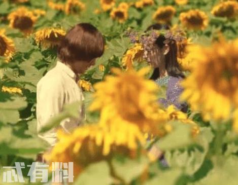 向阳的日子好看吗豆瓣评分是多少 这部电影主要讲了什么
