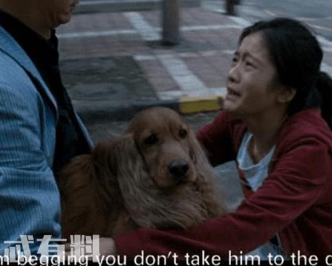 狗十三主要故事内容剧情介绍 剧情主要想表达什么